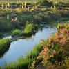 Blooming Yucca and Tamarisk Along Piru Creek Southern California