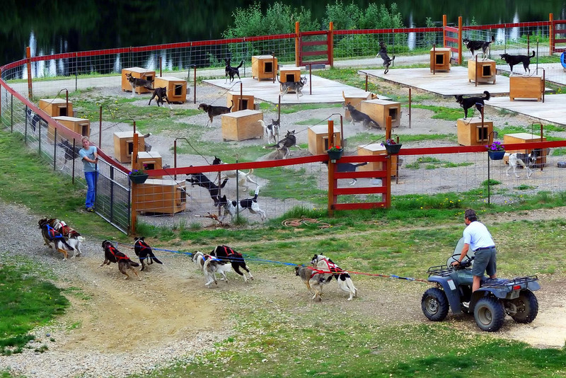 Susan Butcher sled dog kennel