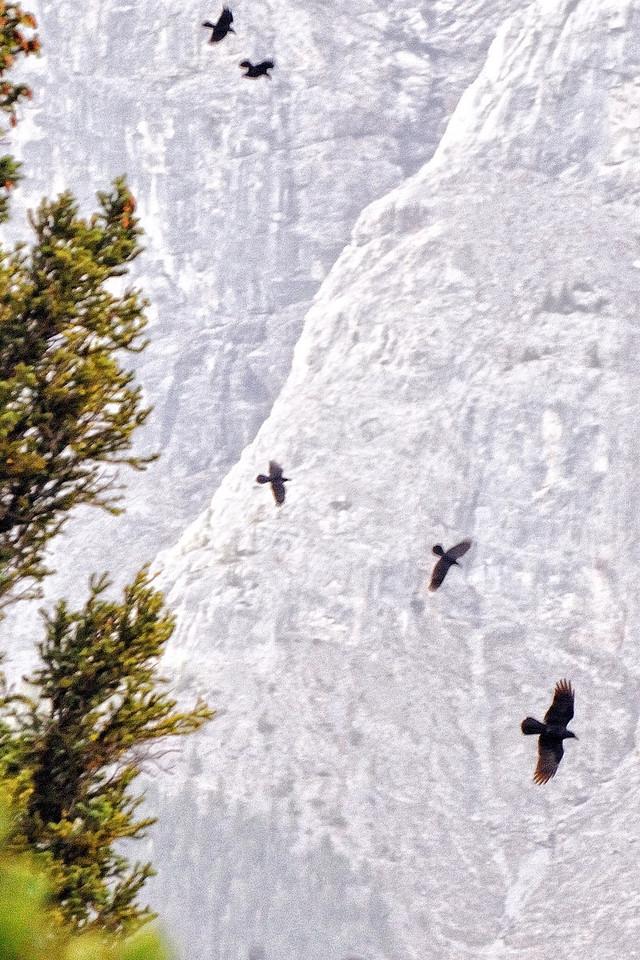 Ravens playing above Hoodoo Overlook