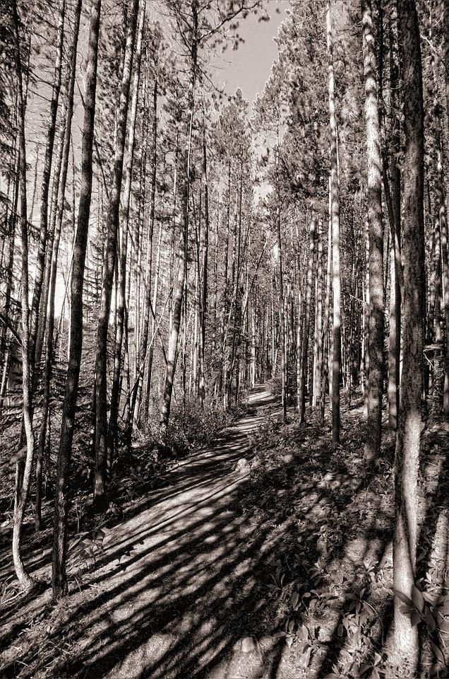 The Woods near Herbert Lake