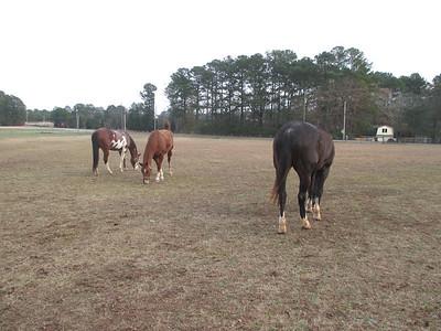 Wild Oak Horse Farm