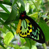 Denice  Petit - The Butterfly Garden in Florida