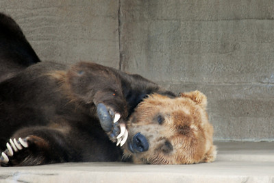 Rhonda Boback - Tulsa Zoo