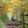 joyce fischer - apalachion trail