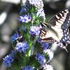 Jill Okihiro - Some Kind of Butterfly