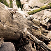 Irene Phillips - Yosemite wood