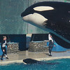 Melissa Mercado - Seaworld Photo