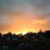 Luke  Brog - Roses and Sunset