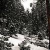 Irene Phillips - Yosemite Snow