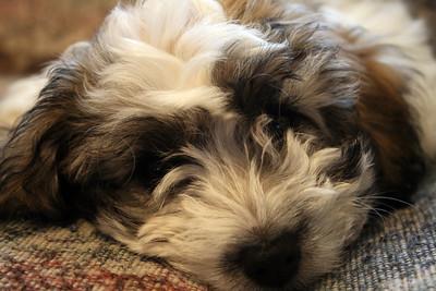 Puppy Bliss