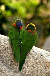 Avian Bliss