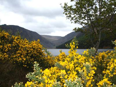 Jen Vensel - Lake near Glendalough in Ireland