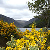 Jen Vensel - Lake near Glendalough in Ireland