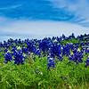 John  Mead - Bluebonnet Sky