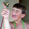 a summer butterfly