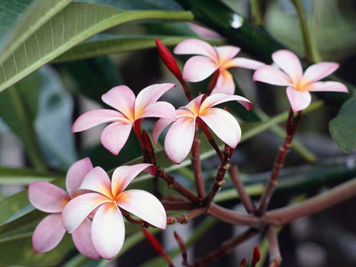 danielle  tilton - flowers