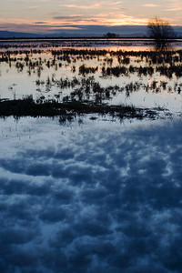 Reflecting Clouds at Merced NWR