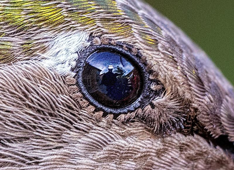HB eye cu  1855
