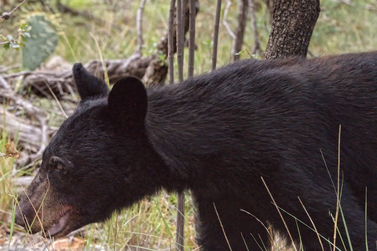 Close Encounters of the Bear Kind