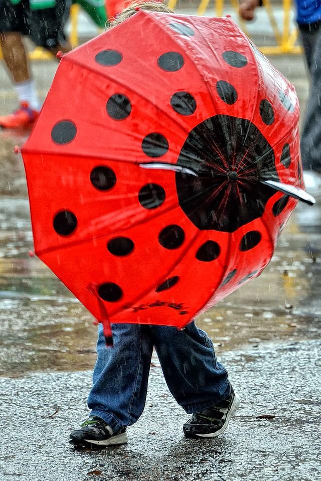 Lady bug umbrella