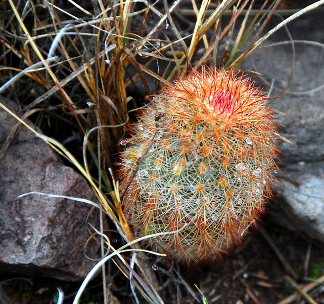 Colorful cactus with dewdrops