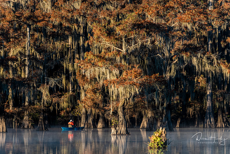 Caddo Lake Cypress scene