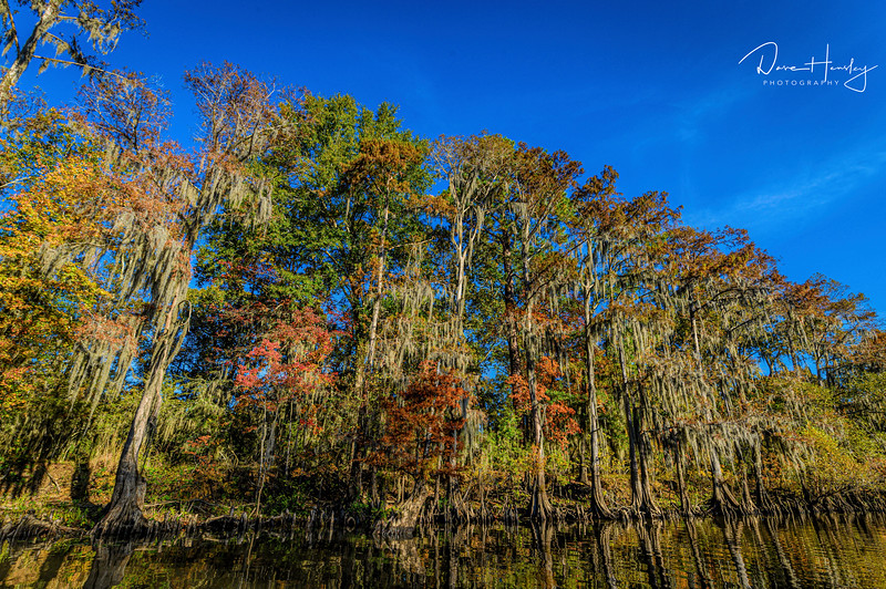 Caddo Lake color