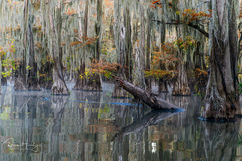 Caddo Lake reflections