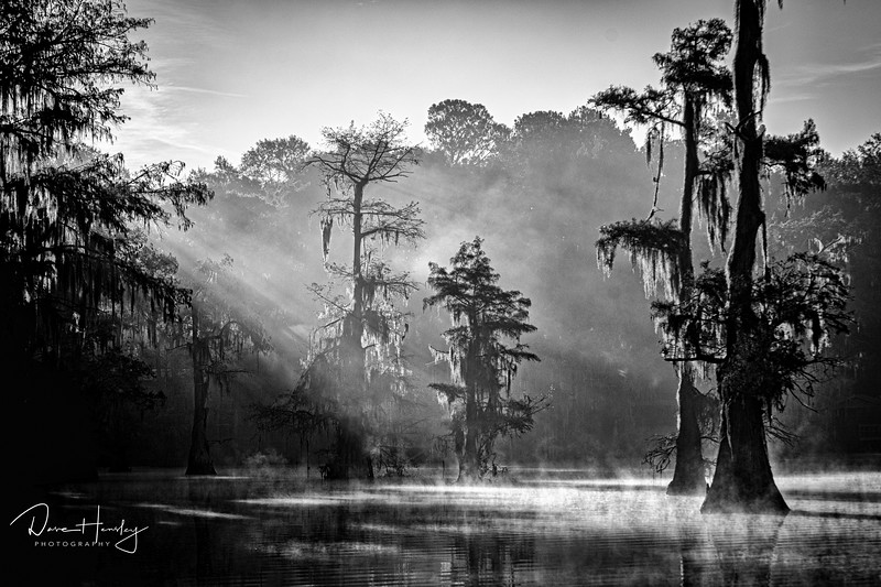 Morning light on Caddo Lake