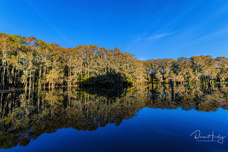 Caddo Lake reflection
