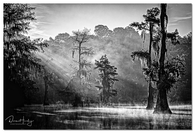 Caddo Lake Mist