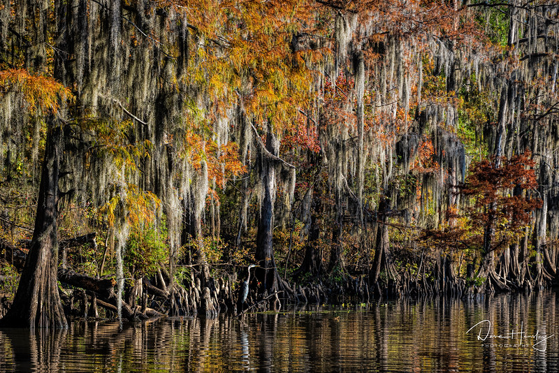 Caddo Lake fall colors