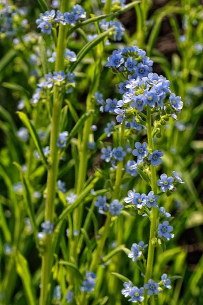 Grand Teton Flora