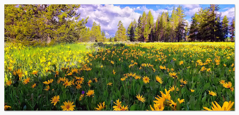 Mule Ears in Grand Teton National Park