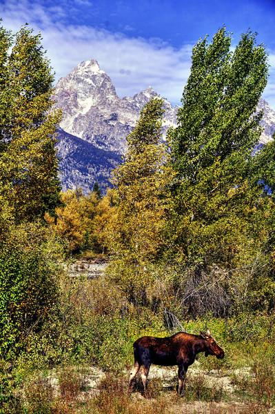 Grand Teton wildlife