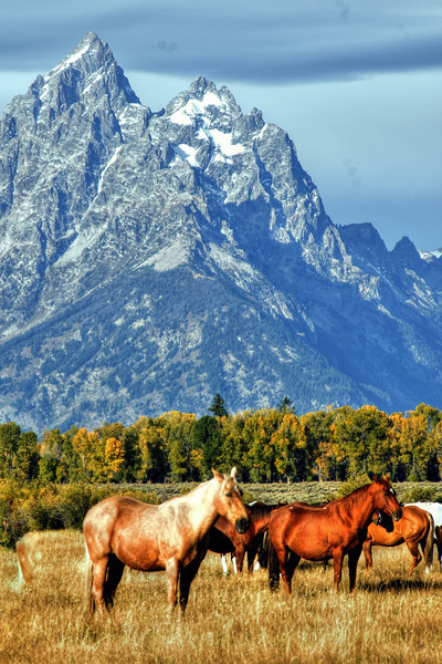 Horse pasture with a view
