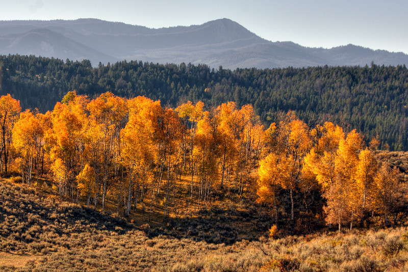 Aspens at Buffalo Ridge overlook