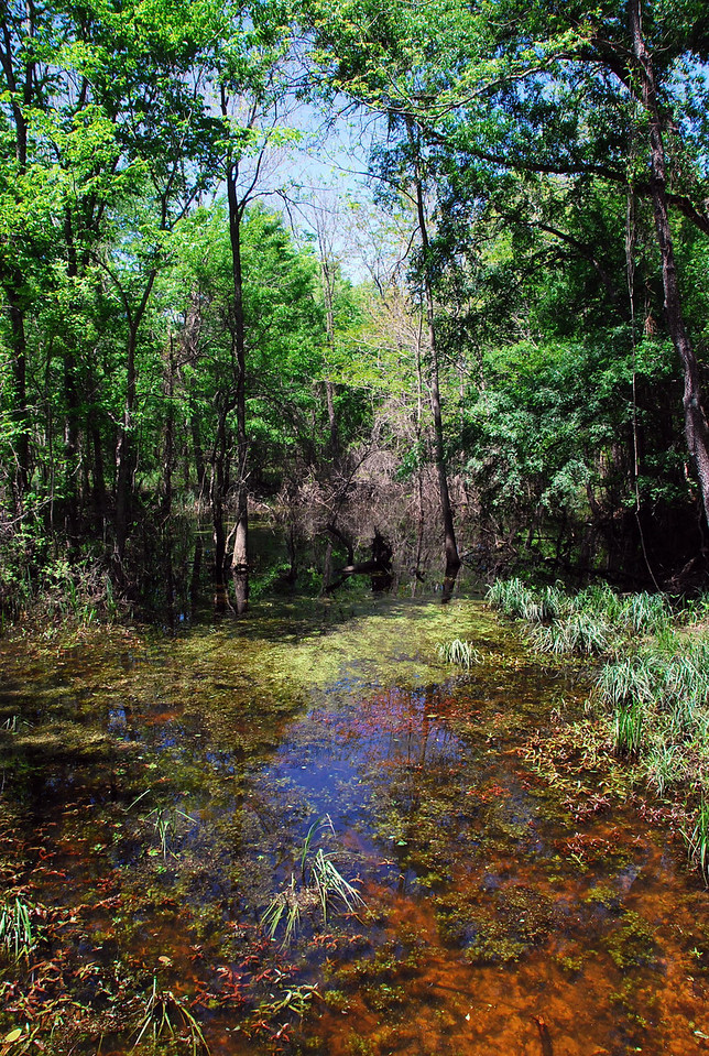 Sabine River wetlands in Mineola Nature Preserve