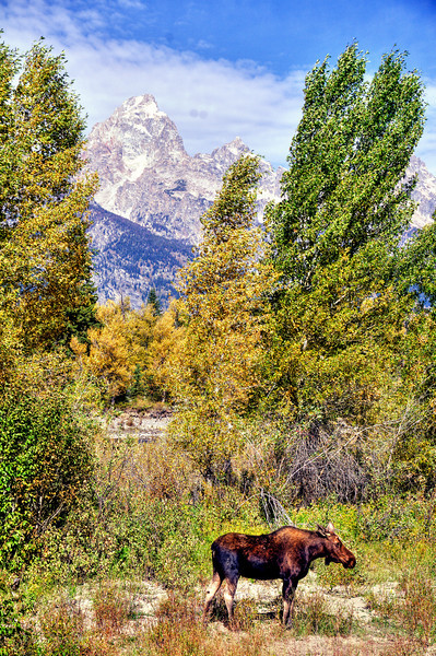 Grand Teton wildlife