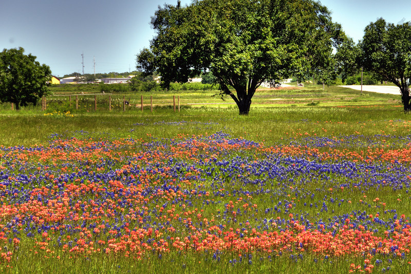 Bluebonnets and Indian Paintbrushes in Stephenville, TX