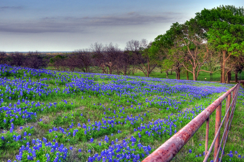Bluebonnet Hill on Sugar Ridge Road