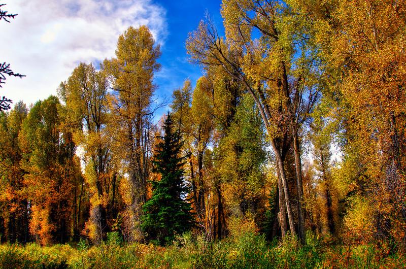 Enchanted forest at Upper Schwabacher Landing