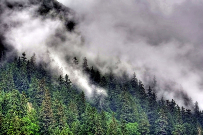 Morning fog - Juneau