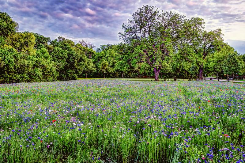 Prairie Creek Park, Richardson