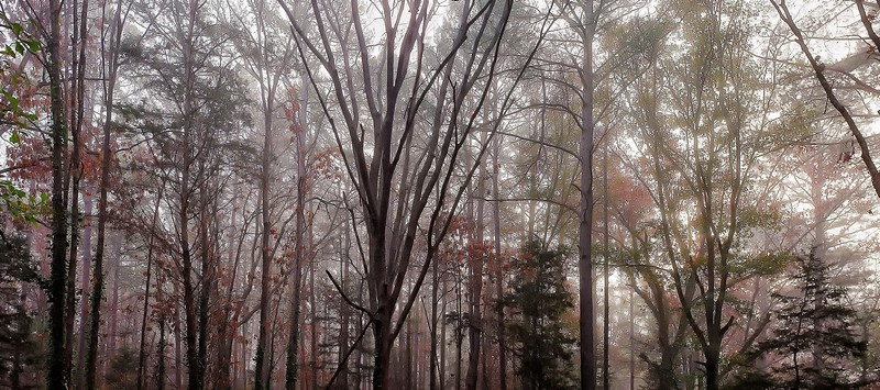 East Texas Winter Foggy Morning