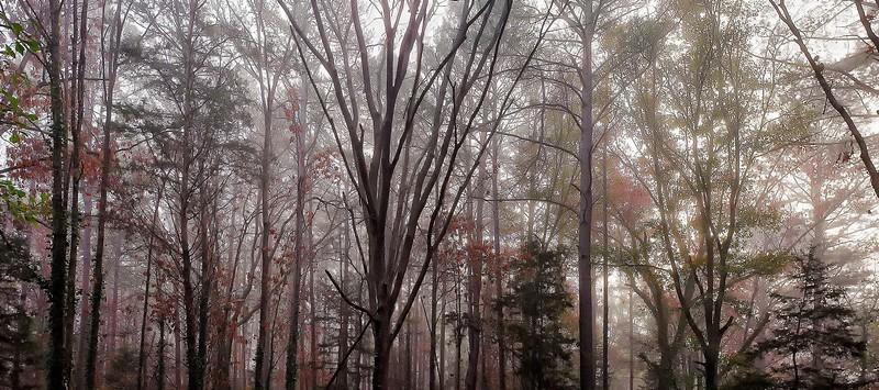 East Texas Winter Foggy Morning