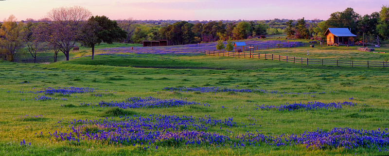 Little house on the bluebonnet prairie