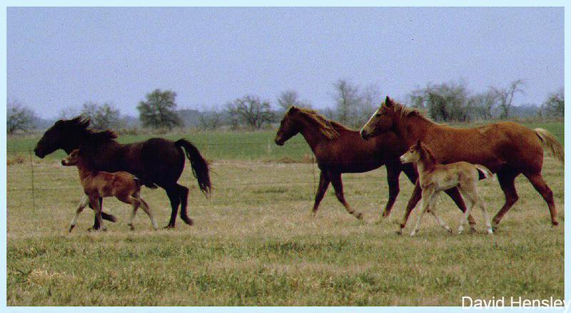 Mine horses