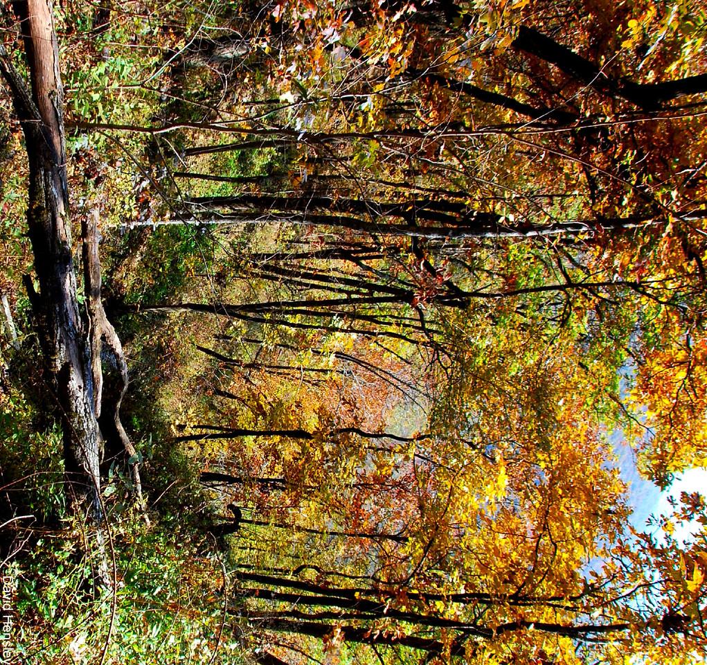 Talimena autumn