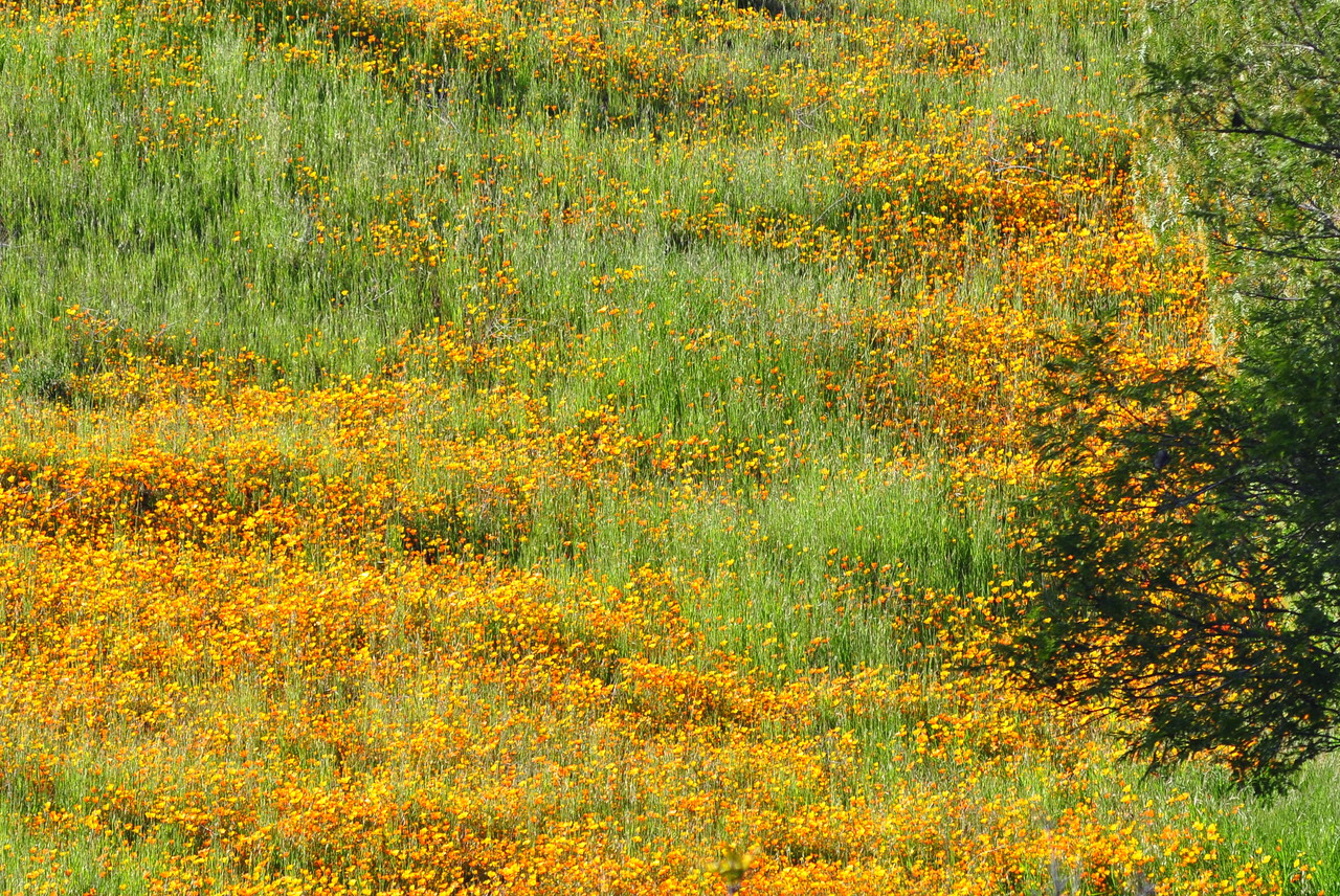 Hillside color - Mulholland Highway